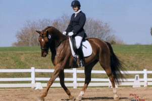 Dario_Dressage_1_cropped