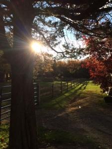 pasture_sun